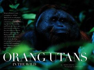 98Aug-Orangutans-2