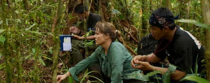 Orangutan researcher Cheryl Knott and field assistants keep a vigil observing dying female orangutan Kristen in the peat swamp forest, Borneo.