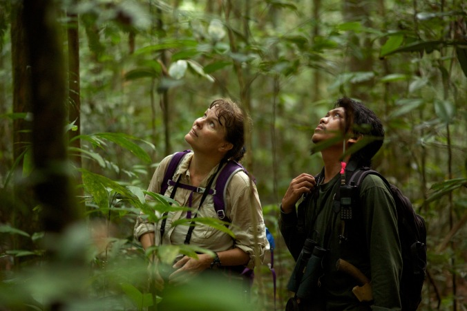 Dr. Cheryl Knott and field assistant, Rusda, observe an orangutan at Cabang Panti Research Station. Photo © Tim Lama.